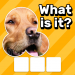 Free Download Zoom Quiz: Close Up Pics Game, Guess the Word v3.5.1 APK