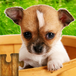 Dogs Jigsaw Puzzles Game – For Kids & Adults v28.2 APK Download Latest Version