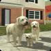 Download Dog Sim Online: Raise a Family v200 APK Latest Version