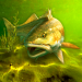 Free Download My Fishing World – Realistic fishing v1.14.97 APK