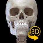 Skeleton   3D Anatomy v2.5.3 APK Download For Android